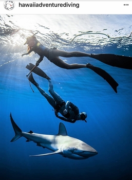 Hawaii Adventure Diving Shark Dive Tours