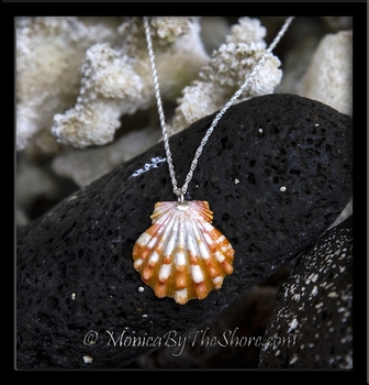 Tiger Stripe Hawaiian Sunrise Shell Sterling Silver Necklace