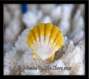 Yellow White and Pink Hawaiian Sunrise Shell Sterling Silver Ring