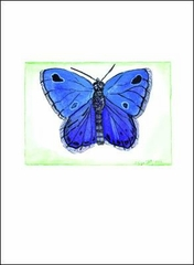Studio C Blue Butterfly - Boxed Note Cards
