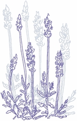 Dried Lavender 1