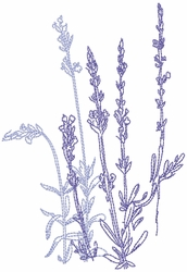 Dried Lavender 2