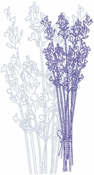 Dried Lavender 3