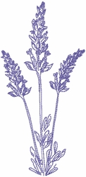 Dried Lavender 6