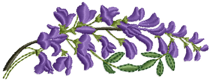 Purple Vine Branch