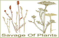 Savage Of Plants