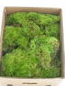 Green/Clump Moss (Small)