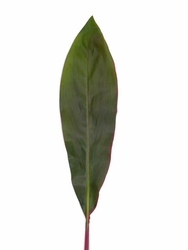 Ti Leaves (Red Large)