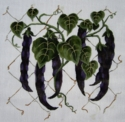 Hanging Purple Beans