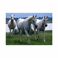 Melissa and Doug 100 Pieces White Stallions Cardboard Jigsaw - click to enlarge