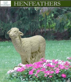 Cotswold Meadow Sheep {USA}n