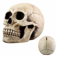YTC 8146 Skull Money Bank