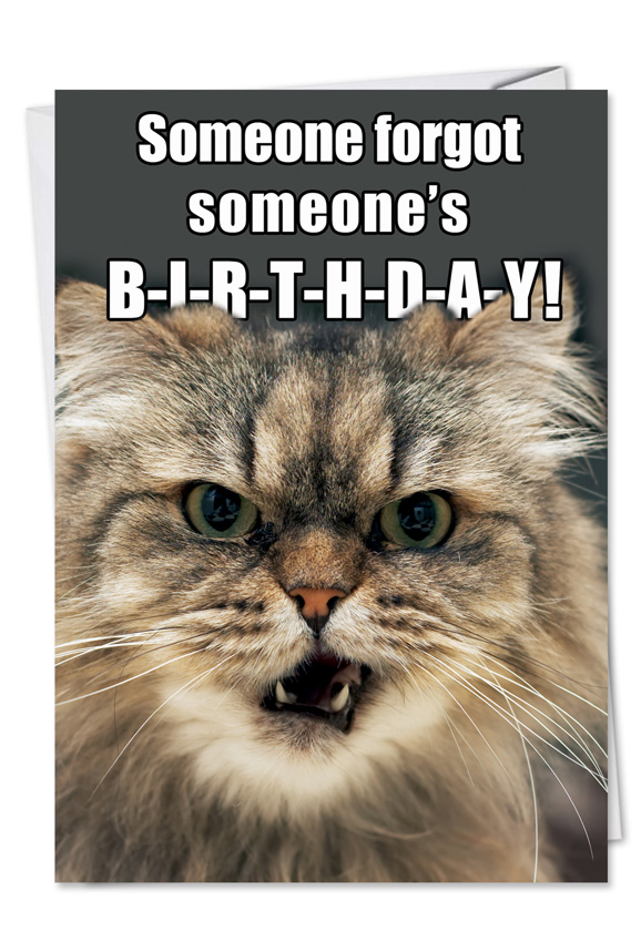 Angry Cat Forgot Birthday Petigreet Birthday Paper Card Nobleworks