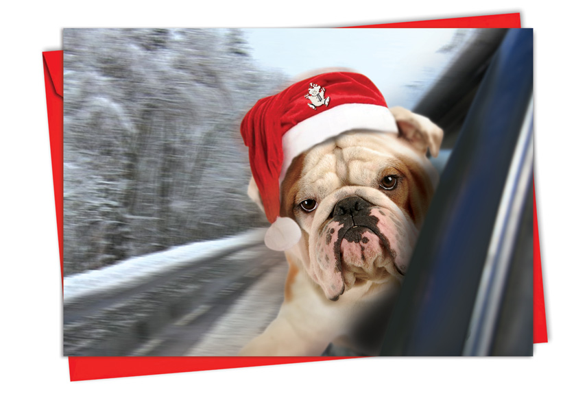 Holiday Doggie in the Window: Stylish Christmas Card