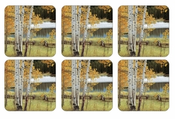Set of 6 Birch Beauty Coasters by Pimpernel