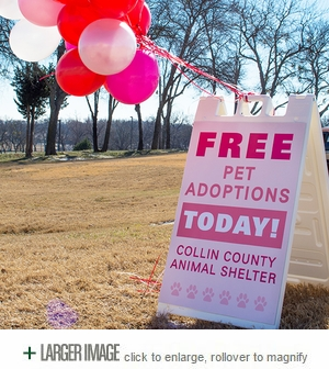 Free Pets for 1 Day