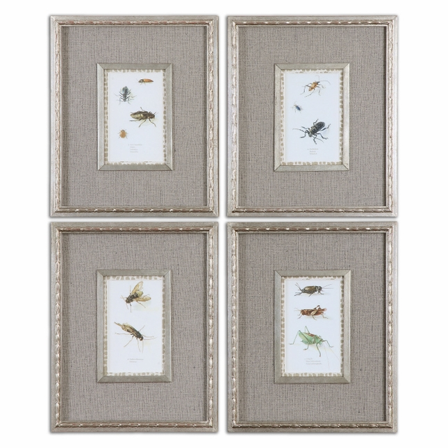 Insect Study Set of 4 Framed Art 41536