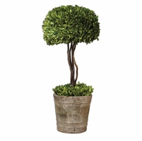 Preserved Boxwood Mossy Stone Tree Topiary 60095