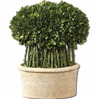 Preserved Boxwood Trees-Greenery Willow Topiary 60108