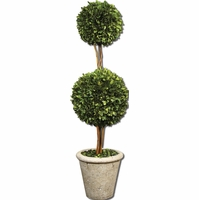 Preserved Boxwood Two Sphere Topiary 60106