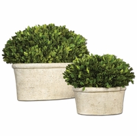 Preserved Set of 2 Oval Domes Boxwood 60107