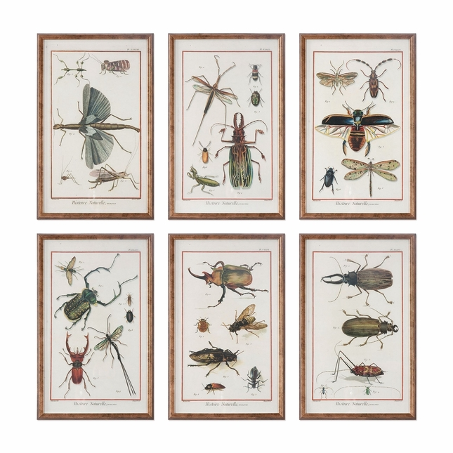 "Set Of 6, Nature Theme Insects And Bugs Print In Copper Bronze Frames, 10""x16"""