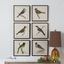 """Set Of 6, Vintage Style Spring Soldiers, Bird Prints In Square Frames, 15""""x15"""""""