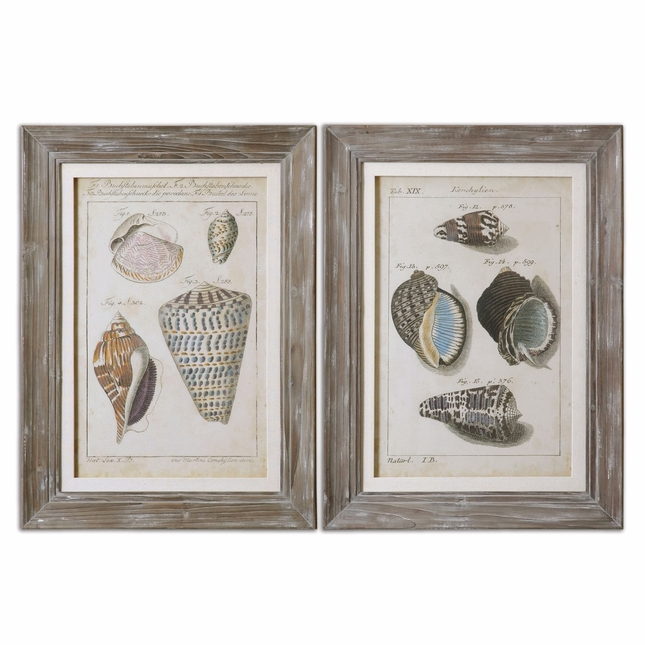 Vintage Shell Study Set of 2 Framed Art 41532
