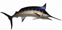 "120"" Blue Marlin Half Mount Fish Replica"