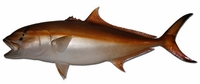"49"" Amberjack Half Mount Fish Replica"