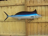"70"" Shortbill Spearfish Half Mount Fish Replica"