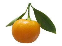 5 pounds Calamondins