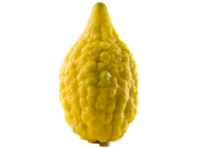 5 pounds Etrog Citron