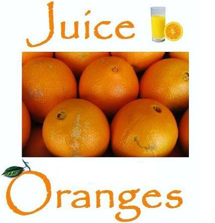 Juice Oranges 20 lb. box