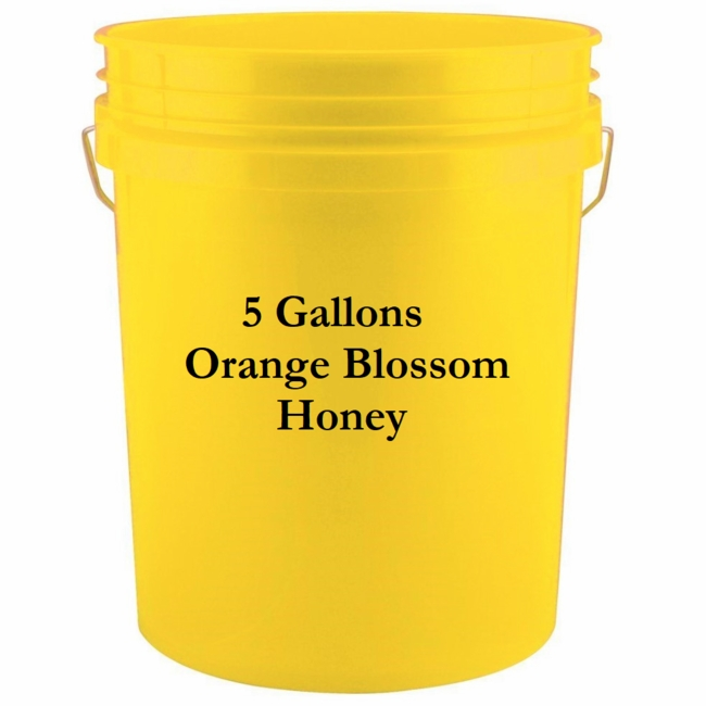 Orange Blossom Honey<br> 5 gal. bucket