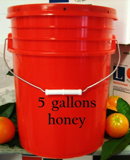 Orange Blossom Honey 5 gal.