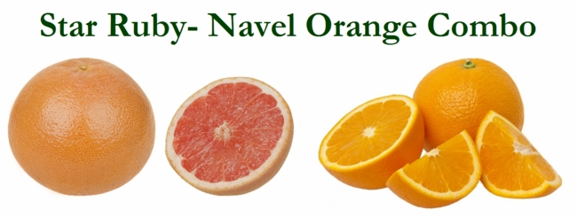 Star Ruby-Navel Orange Combo