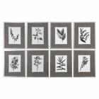 Uttermost Sepia Gray Leaves Prints S/8