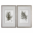 Uttermost Sepia Seaweed Prints S/2