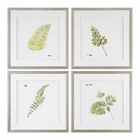 Uttermost Watercolor Leaf Study Prints S/4