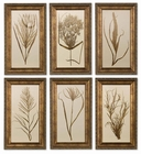 Uttermost Wheat Grass Framed Art Set/6