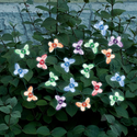 Color Changing Butterfly Solar String Light