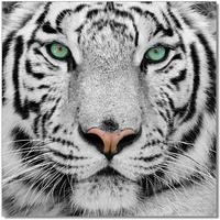 J & M Furniture Wall Art Black & White Tiger