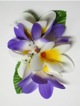 Plumeria hair clip #22 Purple /white