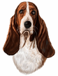 Basset Hound Decal Window Sticker