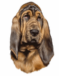 Bloodhound Decal Window Sticker