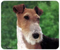 Wire Fox Terrier Mousepad