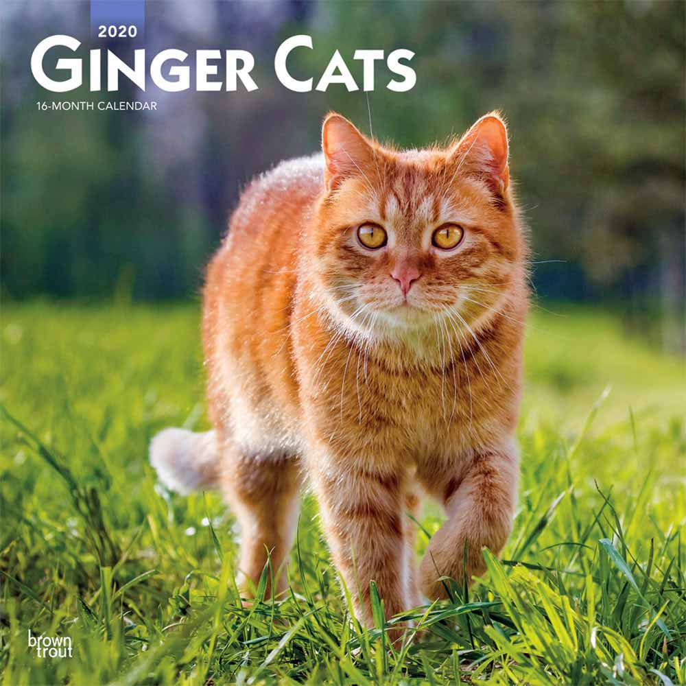 2020 Ginger Cats Calendar