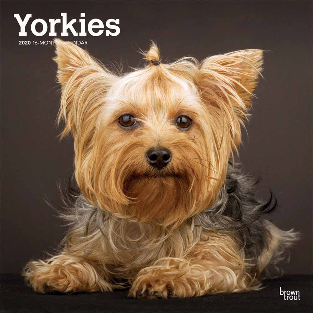2020 Yorkshire Terriers Non Cropped Calendar