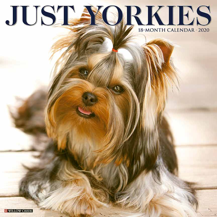2020 Just Yorkies Calendar Willow Creek